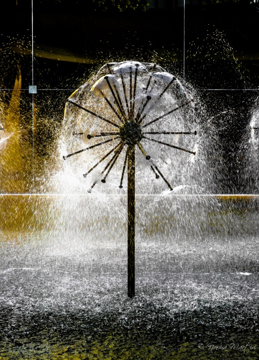 Dandelion Fountain 1 (1)