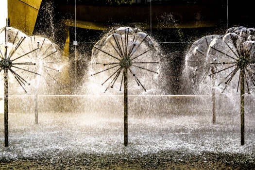 Dandelion Fountain 2